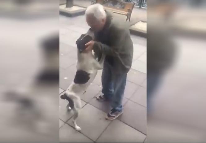 Мужчина нашел свою собаку на улице спустя 3 года после пропажи (видео)