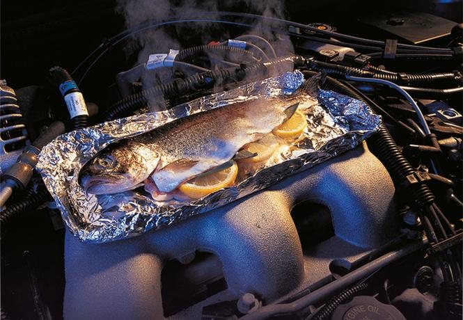 форель капотом приготовить рыбу двигателе автомобиля