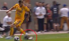 кот выскочил поле время атаки выдержке футболистов позавидовать