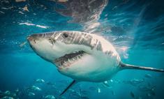 Как не быть съеденным акулой
