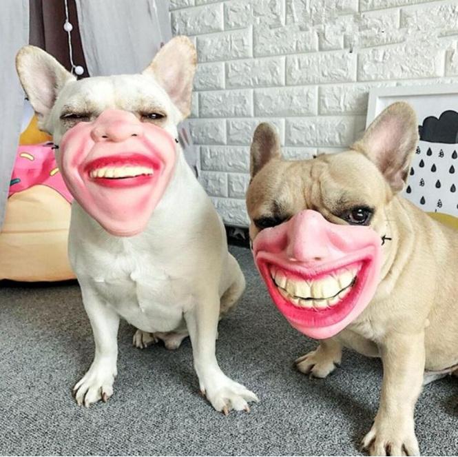 amazon продают странные собачьи намордники