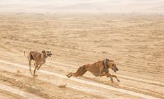 Пять самых древних пород собак
