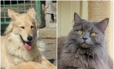 Котопёс недели: возьми из приюта собаку Бьюти или кошку Тринити