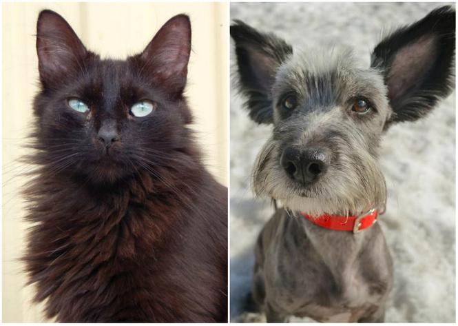 Котопёс недели: возьми из приюта кота Блэка или собаку Нюсю