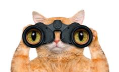 9 животных-шпионов