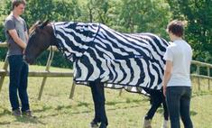 ученые разгадали зебрам полоски