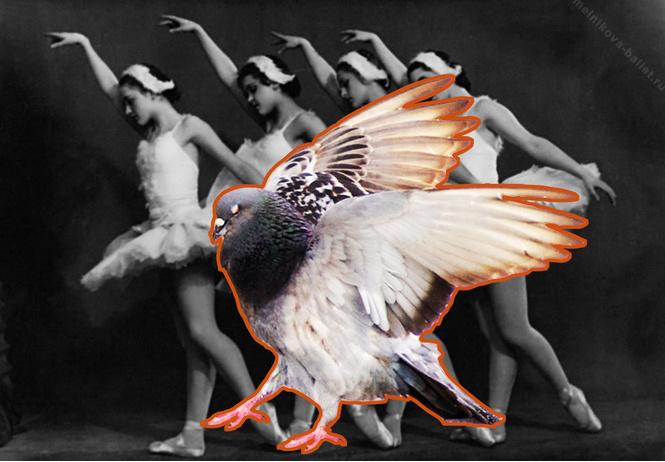 видео танцующим голубем вирусным всё задорно
