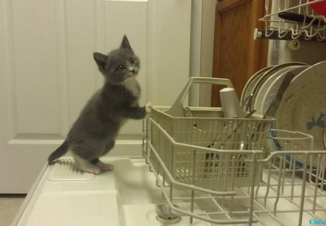 8 вещей, которые, оказывается, тоже можно мыть в посудомоечной машине!