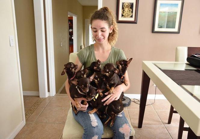 самую маленькую мире собаку клонировали