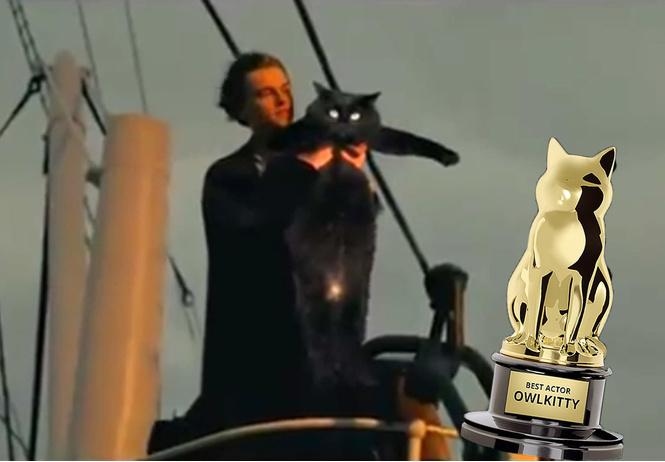 монтажер вставляет кошку самые популярные фильмы получается смешно