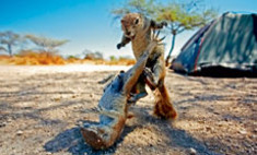 переполох бестиарии неожиданных фотографий животных историями