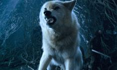 5 фактов, которые рассказал Джордж Мартин о сериале-приквеле «Игры престолов»
