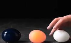 сети появилась идиотическая видеоинструкция куриного яйца большой синий