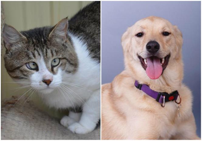 Котопёс недели: возьми из приюта собаку Русю или кота Боцмана