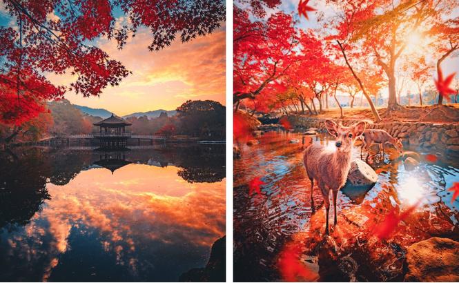 Осень в японской Наре (галерея)