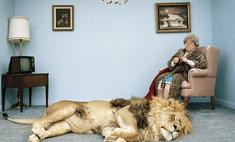 Что будет, если дать валерьянки тигру или льву?
