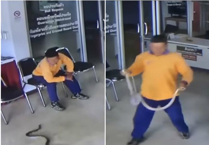 мужчина пришедший полицию подать заявление попутно обезвредил змею