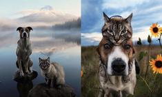 Генри и Балу: «Инстаграм» о путешествиях кота и пса