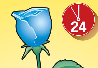 Совет без слов: Как перекрасить розу влюбой цвет