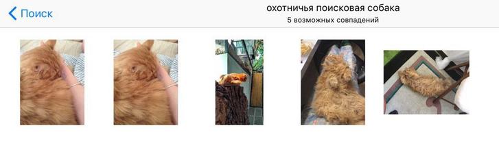 Фото №3 - Новая iOS умеет отсортировывать фотографии девушек в лифчиках