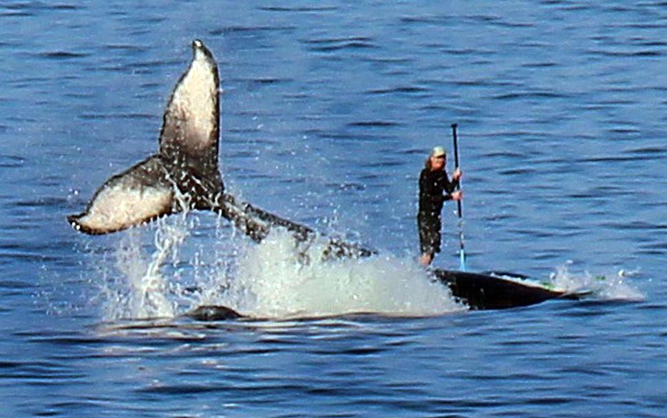 Китовый умысел