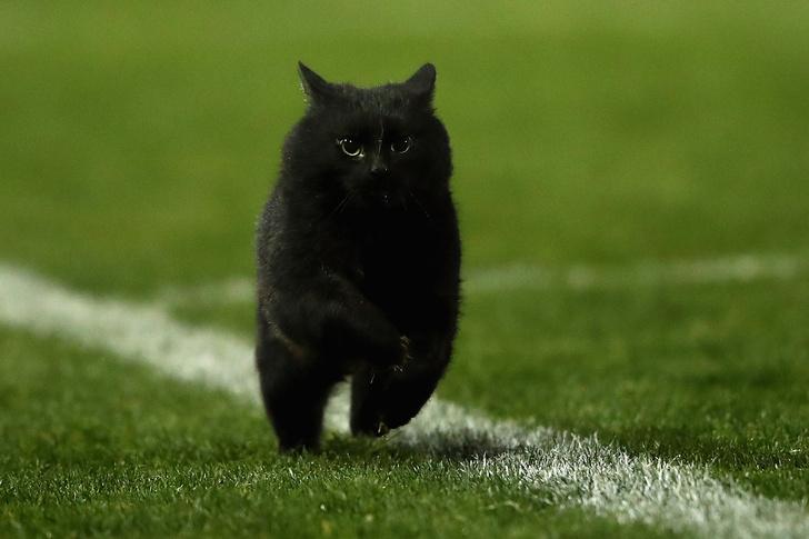 Фото №4 - Шикарный черный кот стал главной звездой регбийного матча