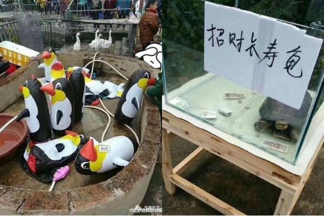 В Китае открылся зоопарк с надувным пингвинами