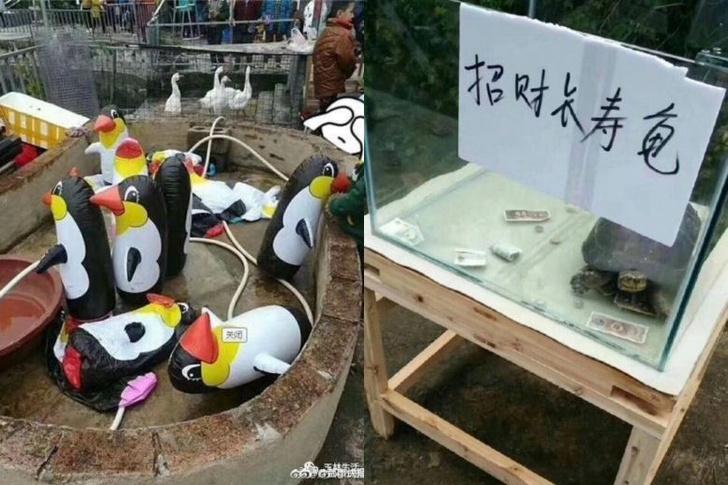 Фото №1 - В Китае открылся зоопарк с надувным пингвинами