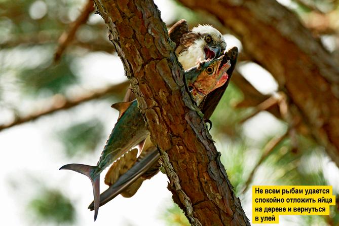 Фото №13 - Переполох в бестиарии: 10 неожиданных фотографий животных с историями