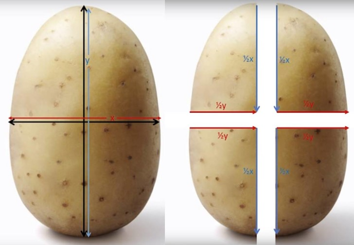 Фото №1 - Как резать картошку, чтобы получилась идеальная хрустящая корочка (математический метод)