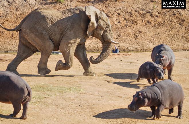 Фото №2 - Фото месяца: слоны без правил