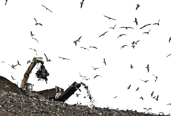 Фото №5 - Легализация отходов: краткая история мусора от древности до наших дней