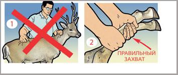 Фото №4 - Как защититься от хулиганов с помощью чайного пакетика, сигареты и других подручных средств