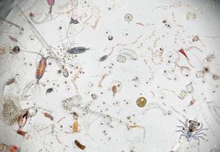 Мокробы. Потрясающий внутренний мир морской воды