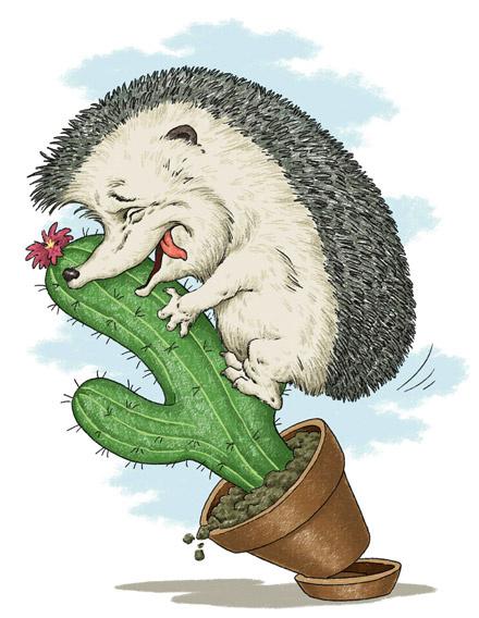 Ежик на кактусе