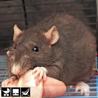 Фото №10 - Как выбрать домашнее животное в зависимости от типа твоего характера и размеров жилплощади