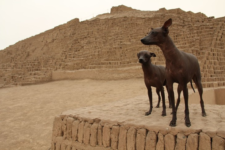 Фото №1 - Пять самых древних пород собак