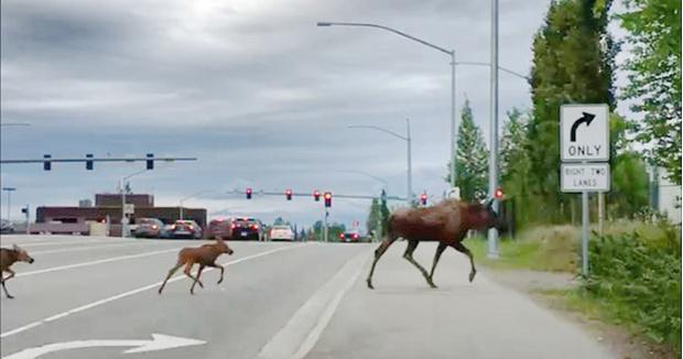 Фото №8 - В аду нужны хорошие стрелки (гонзо-репортаж из Аляски)
