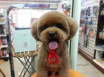 Фото №6 - Новый тренд на Тайване: геометрически правильные собаки