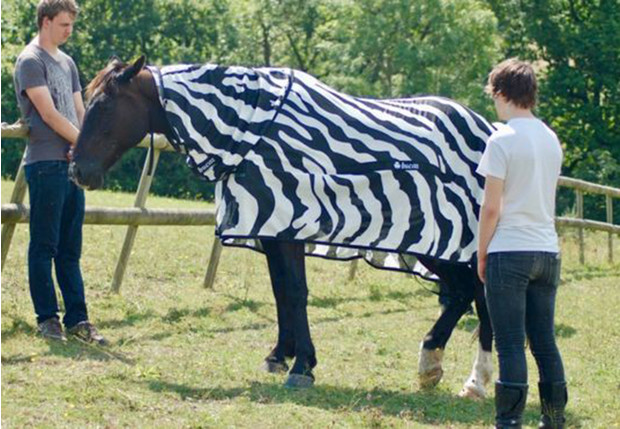 Фото №1 - Учёные наконец разгадали, зачем зебрам полоски