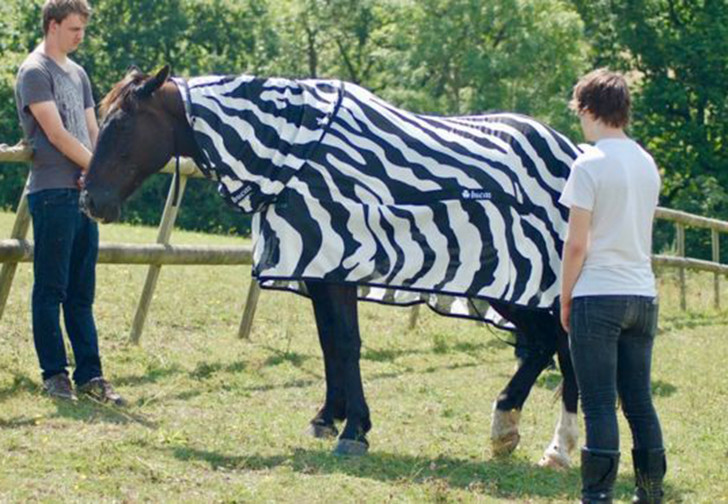 Фото №1 - Ученые наконец разгадали, зачем зебрам полоски