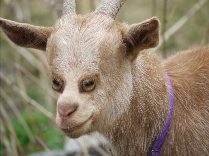 Фото №1 - Вот как выглядели бы животные, если бы глаза у них были спереди!