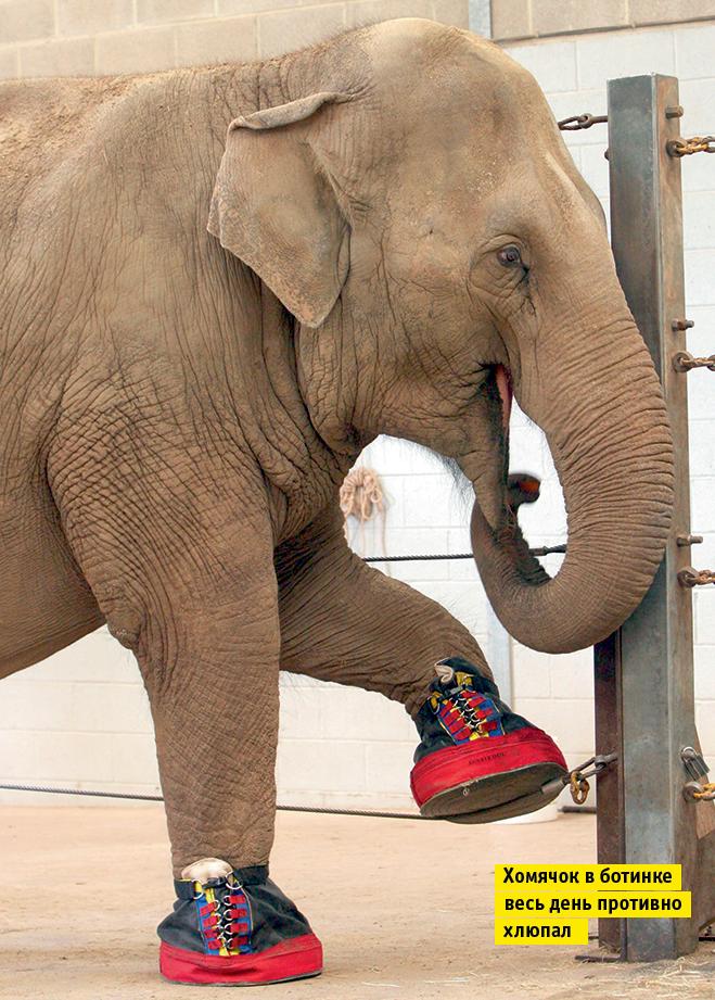 Фото №11 - Слонопотамия. 13 фотоисторий из жизни слонов