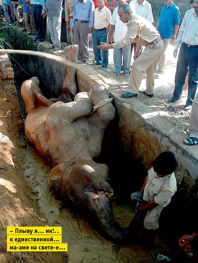 Фото №14 - Слонопотамия. 13 фотоисторий из жизни слонов