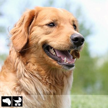 Фото №2 - Как выбрать домашнее животное в зависимости от типа твоего характера и размеров жилплощади
