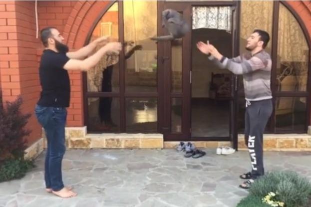 Фото №1 - Чеченские бойцы перебрасываются котом (глубокомысленное ВИДЕО). Кот в шоке, Интернет в гневе!