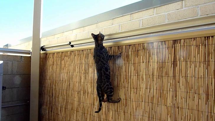 Фото №1 - Австралийцы достроили великую кошачью стену