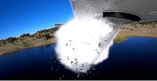 Американские экологи бомбят озера рыбой (видео)