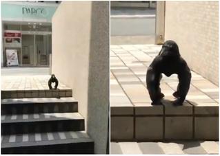 Орнитолог объяснила, что происходит со странной вороной на вирусном видео