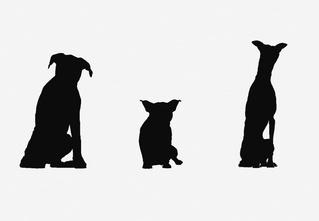 Только 1 из 10 любителей собак справится с этим тестом*